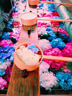 紫陽花の手水舎の写真・画像素材[1239361]