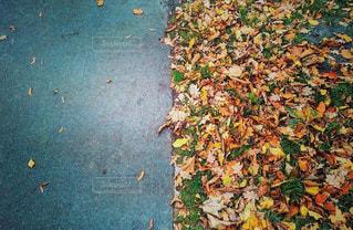 秋の公園の写真・画像素材[1225294]