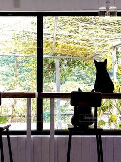 台湾猴硐 猫村のカフェの写真・画像素材[1217611]