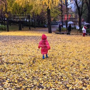 子ども,雨,赤,黄色,子供,女の子,イチョウ,銀杏,長靴,お散歩,レインコート,レインブーツ,大阪城公園,カッパ,秋雨,サンタラン,SantaRun