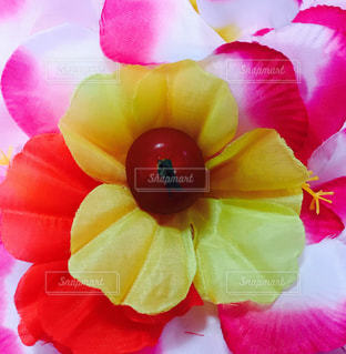 プチトマトとお花の写真・画像素材[1221949]