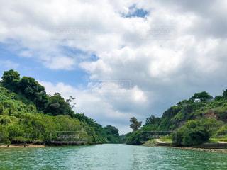 沖縄 比謝川のマングローブの写真・画像素材[1250298]