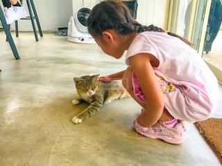 猴硐のカフェで猫を撫でる女の子の写真・画像素材[1255615]