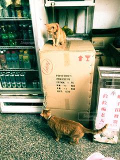 猫のおしゃべりの写真・画像素材[1255650]