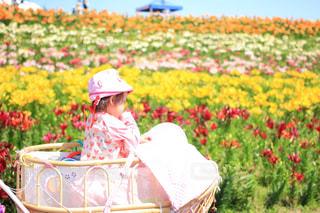 乳母車と百合の花畑の写真・画像素材[1403735]