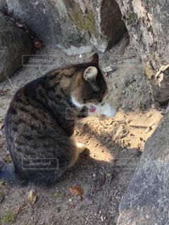 自由猫〜坂の街尾道〜の写真・画像素材[1258013]