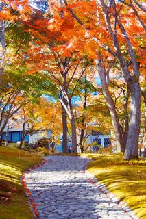 公園の木の写真・画像素材[893394]