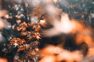 木のぼやけた写真の写真・画像素材[893401]