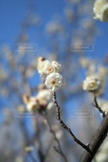 花のクローズアップの写真・画像素材[3016207]