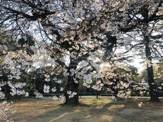 木の前のベンチの写真・画像素材[3192625]