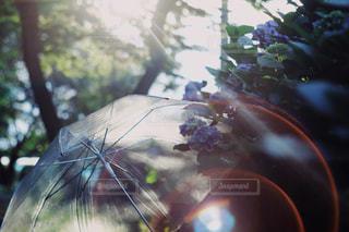 傘,紫陽花,梅雨