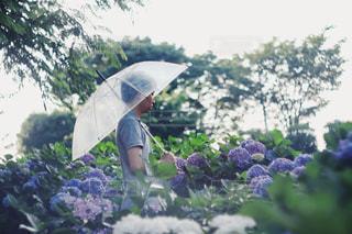 傘さす人。の写真・画像素材[1236819]