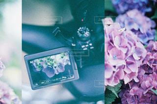 フィルムで撮る紫陽花。の写真・画像素材[1269467]