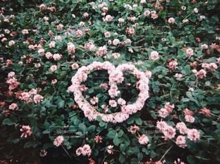 あの日の花冠の写真・画像素材[1245221]