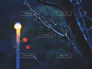 夜,木,雨,暗い,街灯,雫,梅雨,天気,オールドレンズ,雨の日