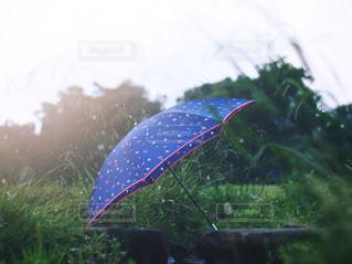 空,雨,傘,屋外,鮮やか,夕陽,雫,梅雨,オールドレンズ,草木,雨の日,おしゃれ