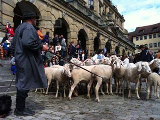 観衆の前で羊のグループの写真・画像素材[1201933]