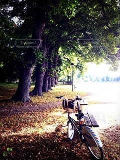 木の隣に自転車を駐車します。の写真・画像素材[1205408]