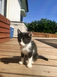 白い建物の上に座っている黒い猫の写真・画像素材[1258460]