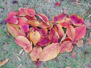 緑の葉とピンクの花のグループの写真・画像素材[1653232]