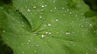 緑の葉の接写の写真・画像素材[2134551]