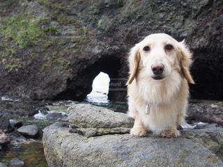 岩の上に座っている犬の写真・画像素材[1200648]
