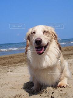砂浜の上に犬の地位の写真・画像素材[1200666]