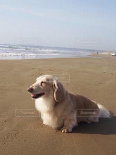 ビーチに立っている犬の写真・画像素材[1200679]