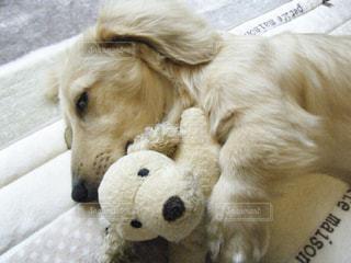 動物のぬいぐるみの上に横たわっている犬の写真・画像素材[1200713]