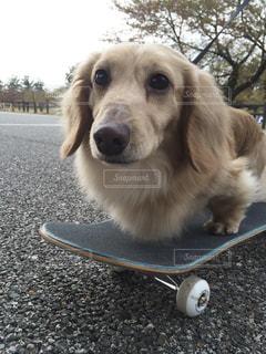 茶色と白犬の写真・画像素材[1200723]