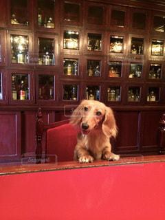 テーブルの上に座っている犬の写真・画像素材[1200724]