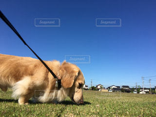 草の上に横になっている犬にはフィールドが覆われています。の写真・画像素材[1200733]