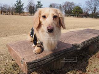 汚れフィールドの上に座っている犬の写真・画像素材[1253225]