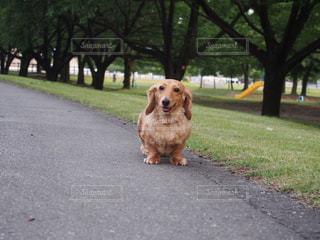 道の端に座っている犬の写真・画像素材[1253683]