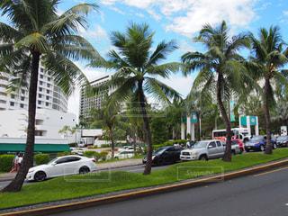車が通り沿いにヤシの木の前に並んでいます。の写真・画像素材[1253688]