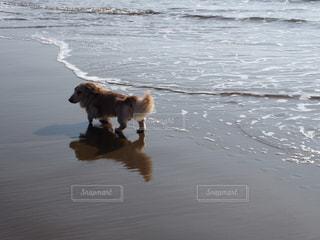 水の体の横に黒い犬の地位の写真・画像素材[1253764]
