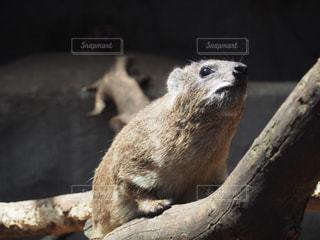 枝の上に座って動物の写真・画像素材[1253796]