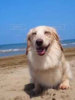 砂浜の上に犬の地位の写真・画像素材[1253803]