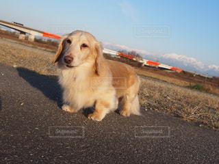 砂の中に座っている犬の写真・画像素材[1253819]