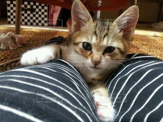 ベッドの上で横になっている猫の写真・画像素材[1255524]