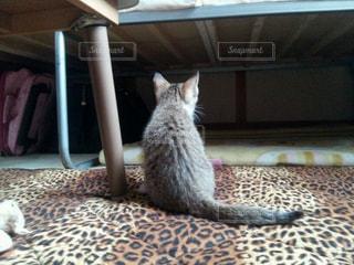 椅子に座って猫の写真・画像素材[1255528]
