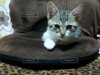 ベッドの上に座っている猫の写真・画像素材[1255538]