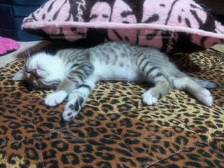 ベッドの上で横になっている猫の写真・画像素材[1255622]