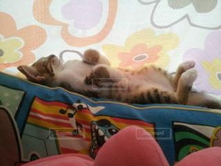 猫の写真・画像素材[1255679]