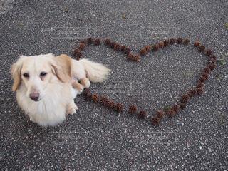 愛犬の写真・画像素材[2282104]
