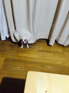 木製テーブルの写真・画像素材[1201706]
