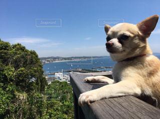 ベンチに座っている犬の写真・画像素材[1201752]