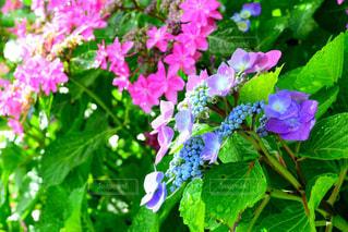 近くの花のアップの写真・画像素材[1230938]