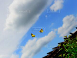 自然,空,雨,屋外,緑,黄色,蝶々,雨上がり,梅雨,蝶,草木,岡山県,自然の森スポーツ広場