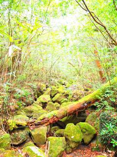 森の中の写真・画像素材[1201904]